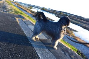ペットシッター調布犬