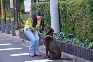 東京調布犬の散歩代行